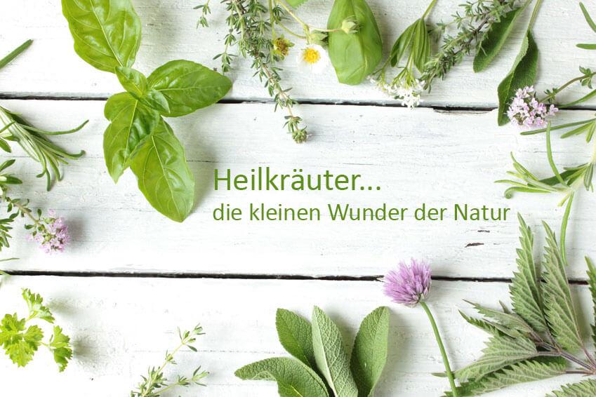 heilkraeuter-die-wunder-aus-der-natur